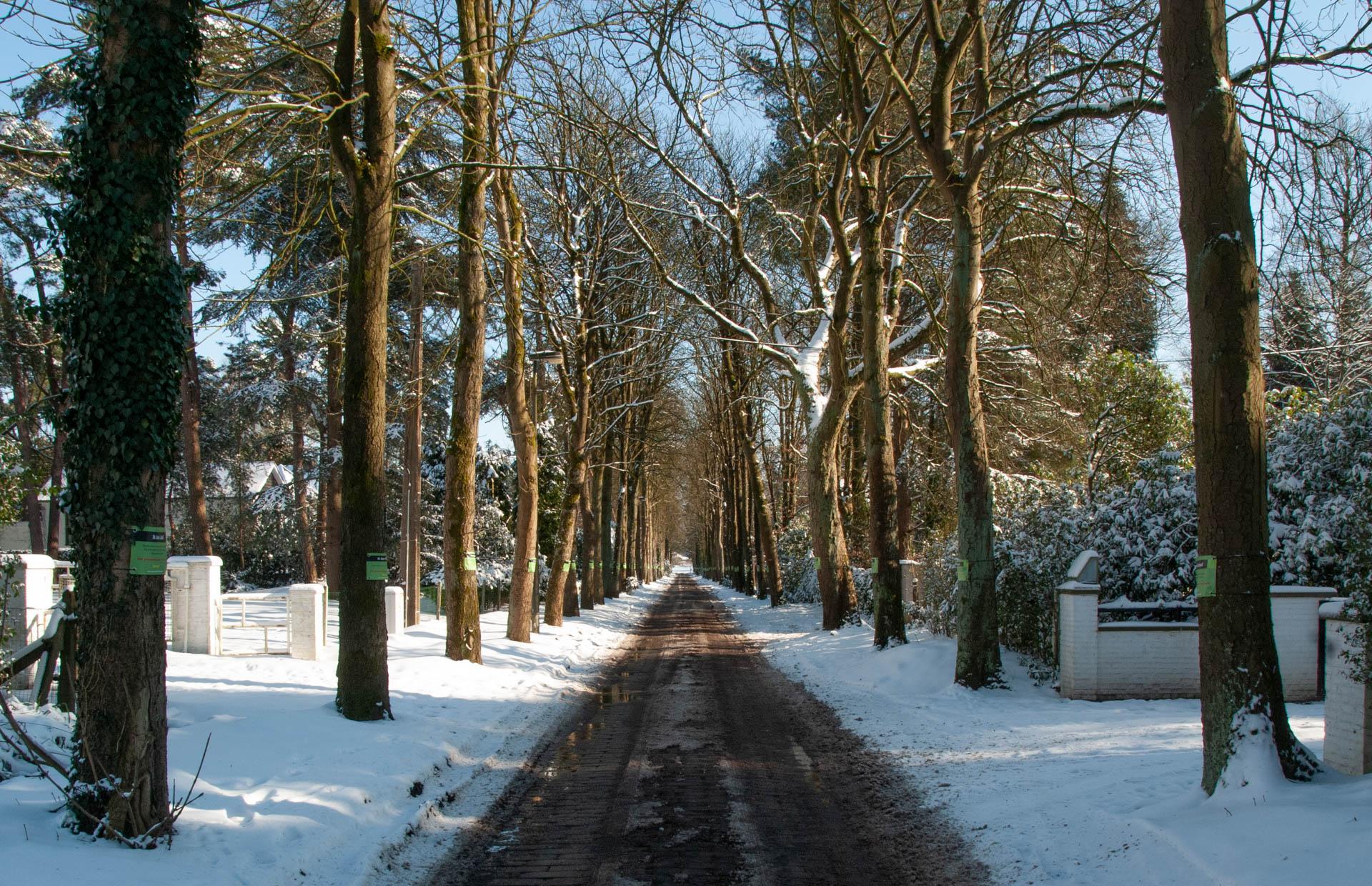 Mostheuvellaan in de sneeuw